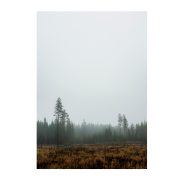 Skog poster 70 x 100 cm